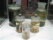 Sale 8331A - Lot 573 - Assortment of Preserved Animal Specimens (5)