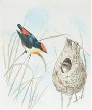 Sale 9038 - Lot 592 - Neville Cayley (1853 - 1903) - Robin and Nest 18 x 15.5 cm (frame: 46 x 37cm)