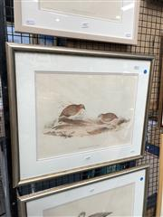 Sale 8856 - Lot 2058 - John Gould  Little Buttonquail hand-coloured lithograph, 58 x 47cm (frame).