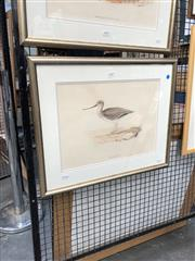 Sale 8856 - Lot 2059 - John Gould Terek Godwit hand-coloured lithograph, 58 x 47cm (frame)
