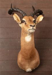 Sale 8871H - Lot 168 - An Impala head mount, 89cm on diagonal