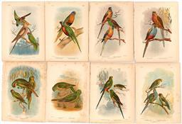 Sale 9252A - Lot 5075 - GRACIUS JOSEPH BROINOWSKI (1837 - 1913) (8 works) Australasian Parrots colour lithographs (unframed) (AF) 38 x 30 cm, each with acco...