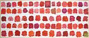 Sale 8316 - Lot 527 - Liana Vassalou (XX) - Vie e Rose, 2003 114 x 252cm