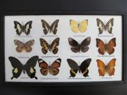 Sale 8431A - Lot 674A - Collection of Butterflies, framed