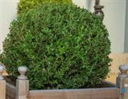 Sale 8745A - Lot 72 - A large topiary sphere, approx H 50cm