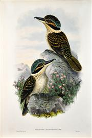 Sale 8358 - Lot 596 - John Gould (1804 - 1881) - MELIDORA MACRORHINA 54.5 x 37cm (sheet size)