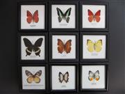 Sale 8431A - Lot 674G - Assortment of Butterflies, framed (9)