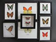 Sale 8431A - Lot 674H - Assortment of Butterflies, framed (8)