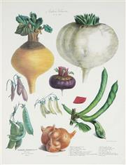 Sale 8773A - Lot 5017 - After E. Champin & Coutance (4 works) - Vegetable Varieties 84.5 x 68.5cm, each (frame size)