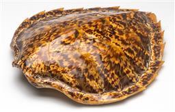 Sale 9211 - Lot 31 - A Turtle Shell (L:36cm)