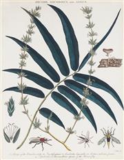 Sale 8773A - Lot 5015 - After John Pass (c1783 - 1832) (5 plates) - Botantical Studies 25 x 19cm (frame: 51 x 43.5cm, each)