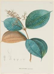 Sale 8773A - Lot 5011 - Pierre Jean François Turpin (4 plates) - Melastoma Botanicals 41.5 x 26.5cm