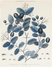 Sale 8773A - Lot 5012 - After John Wilkes (1750 - 1810) (5 plates) - Botantical Studies 25 x 19cm (frame: 51 x 43.5cm, each)