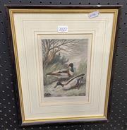 Sale 9011 - Lot 2022 - Artist Unknown - Sheldrake and Shoveler