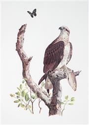 Sale 9009A - Lot 5086 - Morris - Bird of Prey 48 x 34 cm (frame: 67 x 53 x 2 cm)