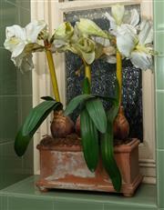 Sale 8990H - Lot 51 - A terracotta rectangular pot containing faux amarylis, pot width 30cm