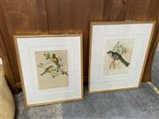 Sale 9072 - Lot 2057 - A pair of John Gould Decorative Prints, frame: 71 x 56 & 63 x 52 cm (glass broken - 1)