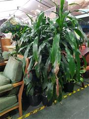 Sale 8672 - Lot 1011 - Collection of Indoor Plants