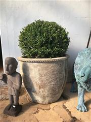 Sale 8745A - Lot 63 - A pair of large stoneware pots, each planted with topiary, each H 60 (not inc. plant) x 75cm in diameter