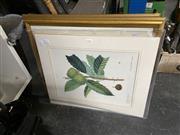 Sale 8906 - Lot 2072 - Group of (4) Botanical Prints