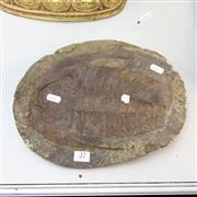 Sale 8362 - Lot 27 - Andalusiana Trilobite, Morocco