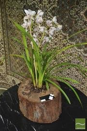 Sale 8383 - Lot 1309 - Cymbidium Orchid in Hollow Log