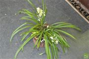Sale 8383 - Lot 1351 - Cymbidium Orchid in Hollow Log