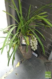 Sale 8383 - Lot 1368 - Cymbidium Orchid in Hollow Log