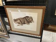Sale 9041 - Lot 2052 - Artist Unknown - Water Buffalo 24 x 31.5 cm (41 x 48 x 3 cm)