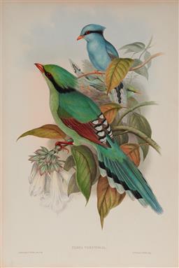 Sale 9133 - Lot 568 - John Gould (1804 - 1881) CISSA VENATORIA: Hunting Cissa hand coloured lithograph, John Gould and W. Hart (unframed) 54.5 x 37 cm (sh...