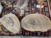 Sale 7905A - Lot 1667 - Fish Fossil in Two Pieces