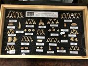 Sale 8822 - Lot 1848 - Large Cabinet of Labelled Fossils