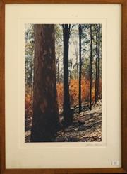 Sale 8734A - Lot 87 - Lynn Pearce - Big Red, Tilwa NSW, 2003 65.5 x 48cm (frame size)