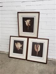 Sale 9061 - Lot 2081 - Set of 3 Framed Floral Photos (60 x 50cm)