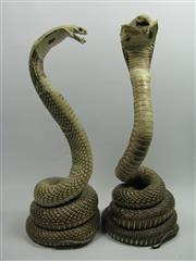 Sale 8331A - Lot 585 - Pair of Taxidermy Cobras