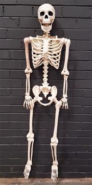 Sale 8979 - Lot 1058 - Plastic Skeleton