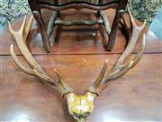 Sale 8848 - Lot 1030 - Pair of Mounted 13 Point Deer Antlers