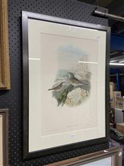 Sale 8995 - Lot 2078 - John Gould & HC Richter - Anthus Obscurus. (Rock Pipit), 1862, Framed