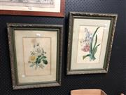 Sale 8819 - Lot 2181 - Pair of Early C20th watercolour Botanical Studies, 52 x 40cm (frame)