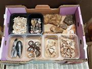 Sale 8745 - Lot 1037 - Box of Fossils