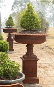 Sale 8871H - Lot 14 - A pair of cast iron urns in classical style raised on plinth bases planted with conical form buxus each height 150, diameter 107cm (...