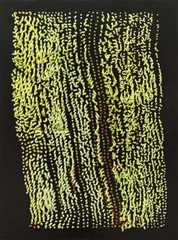 Sale 9249A - Lot 5077 - SARAH EDDOWES Shag silicon and oil on board 81 x 60 cm signed verso