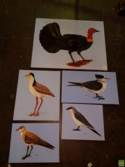 Sale 8631 - Lot 2078 - 5 Canvas Artworks by C.Hawkins: Brush Turkey, Crested Tern, Masked Plover, Australian Pratincole & Little Cuckoo Shrike