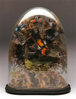 Sale 9122 - Lot 71 - Taxidermy Bird Display In Dome Case (H:55cm)