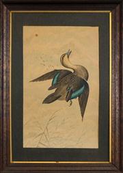 Sale 8449A - Lot 597 - E. P. Smith (XIX) - Shot Duck 47 x 29cm
