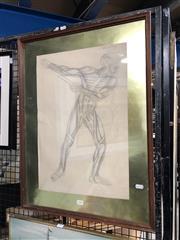 Sale 8779 - Lot 2050 - Human Muscles - Pencil Study